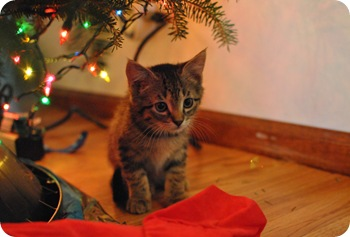 Murray under the tree