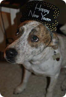 Doc's New Year Hat