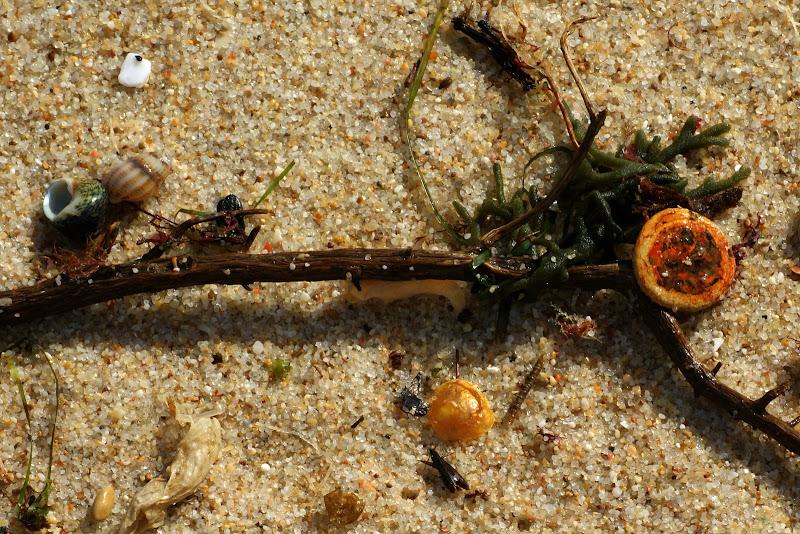 Despojos na praia da Arrábida