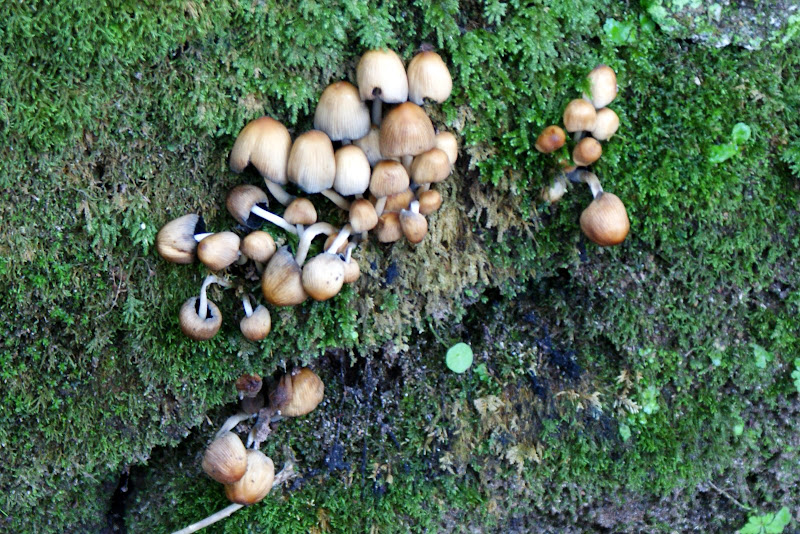 Cogumelos no musgo