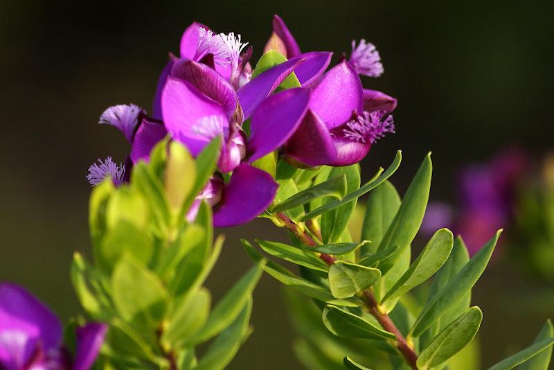 Flores lilás em Albarquel
