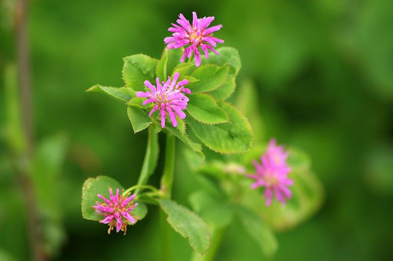 Alentejo em flor, Flores silvestres