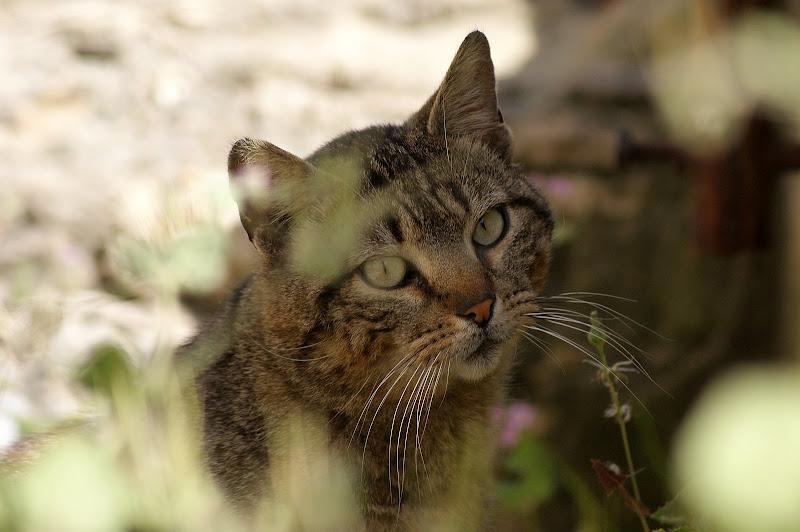 Gato desconfiado