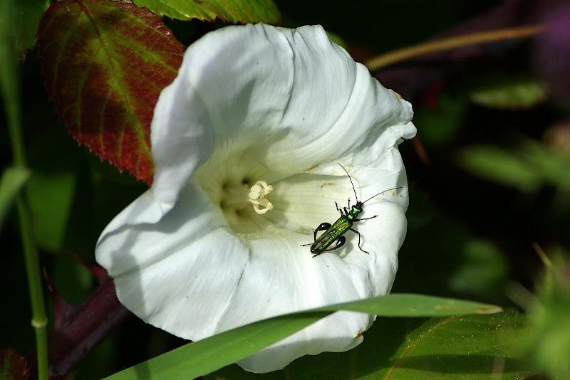 Detalhes da Primavera..a flor branca e o bichinho verde