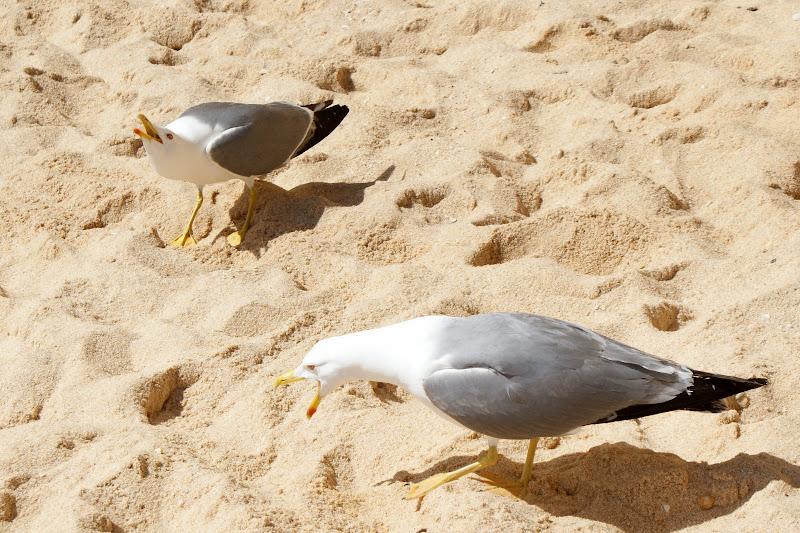 Gaivotas na praia