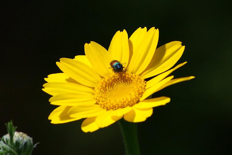 A flor e o bichinho das cores