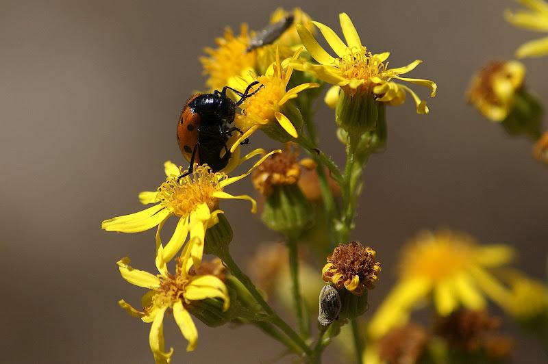 As flores e o bichinho amarelo