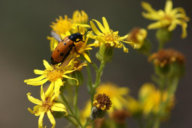As flores amarelas e os insectos