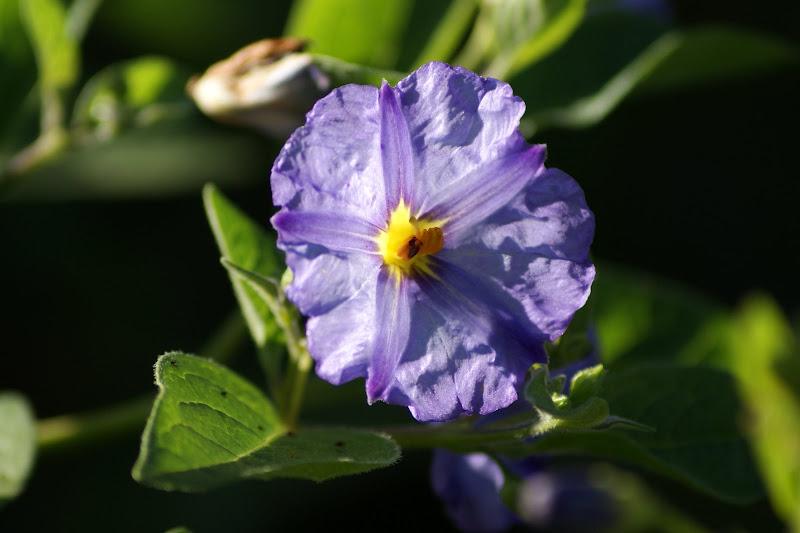 Flores a contraluz.. lilás