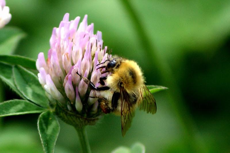 De flor em flor.. abelha