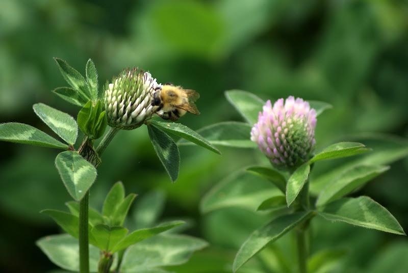 Abelhas, de flor em flor