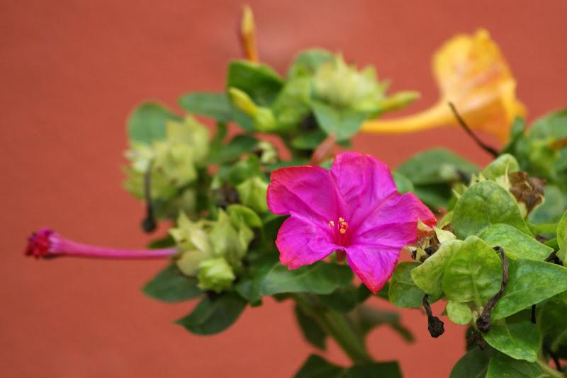 Cores:Encarnado flor