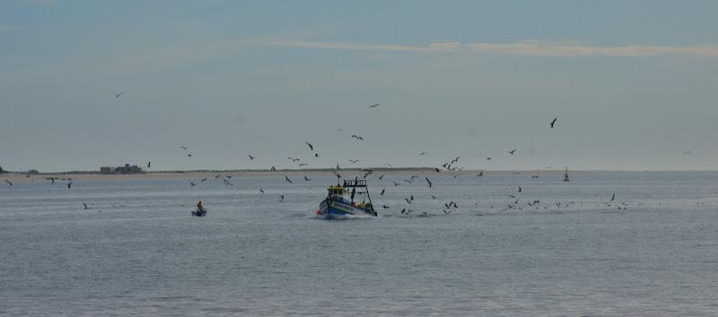 O regresso da faina, o barco e as gaivotas
