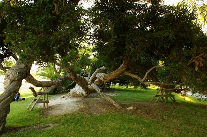 A àrvore