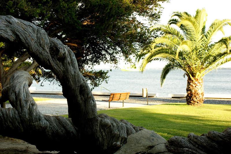 A àrvore, jardim da beira mar, Setúbal