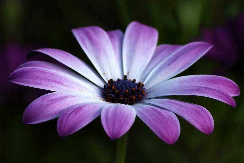 Perspectiva em tons de lilás