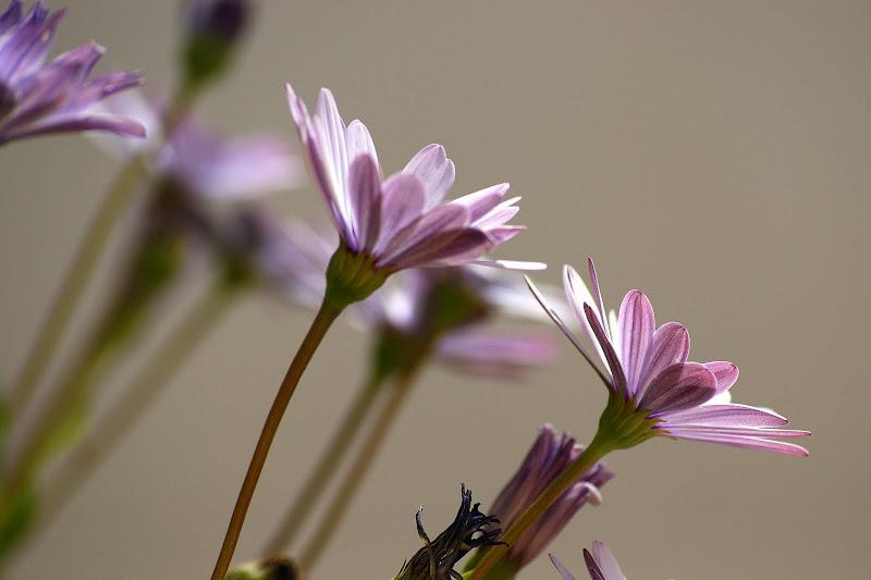 Perspectivas, flores