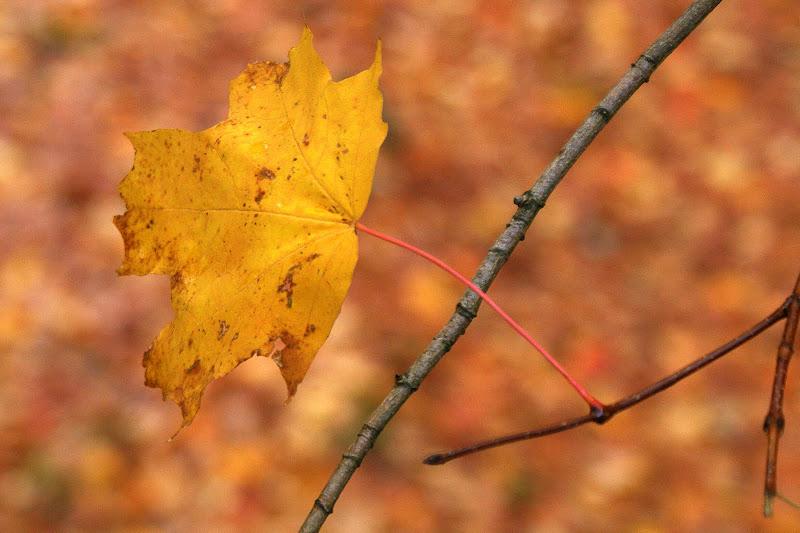 Outono no Gerês, folhas