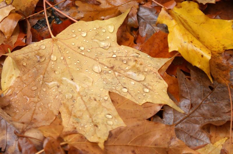 Folhas, cores do Outono
