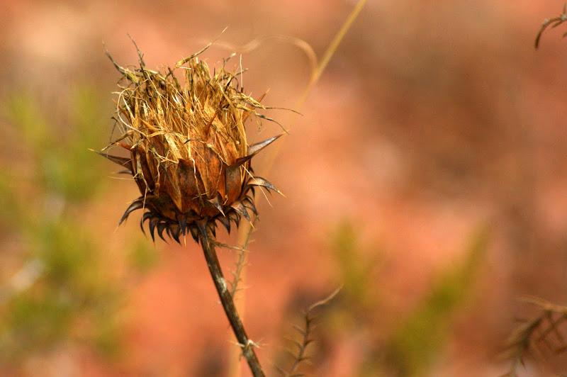 Cardos secos, Outono na Serra do Louro