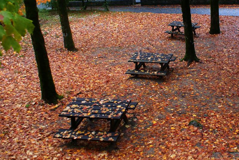 Outono no Gerês