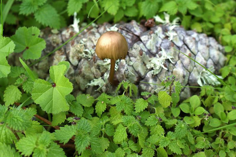 O cogumelo e a pinha
