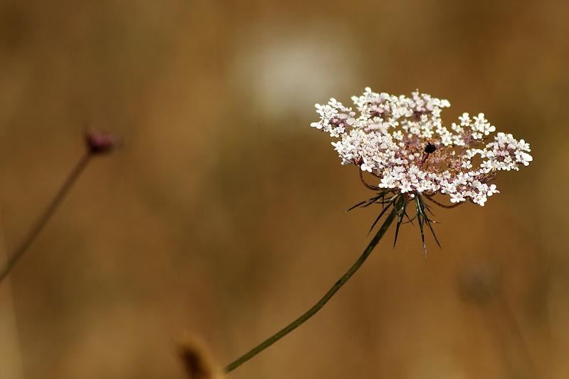 Detalhes do verão, flores silvestres