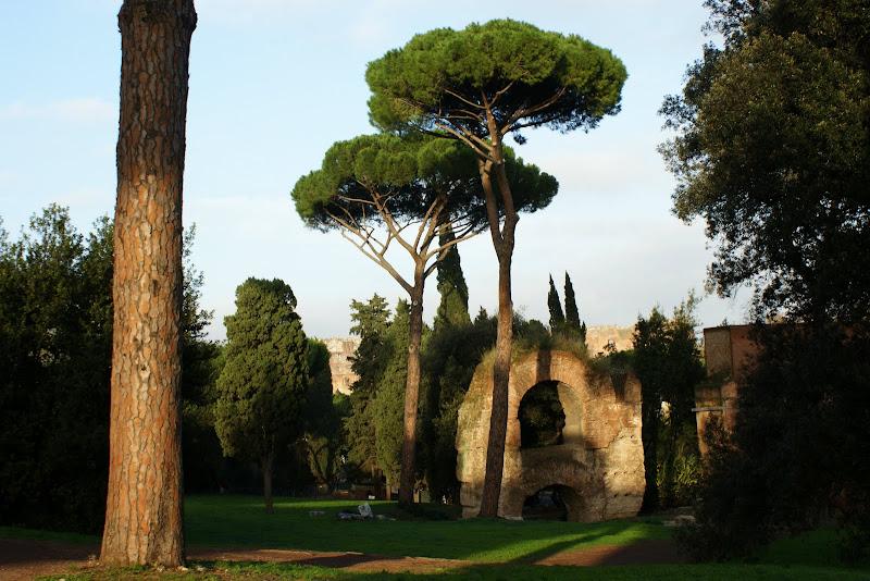 Pinheiros em Roma