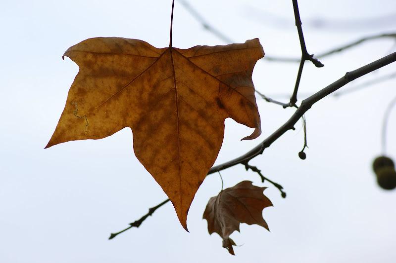 Inverno, folha