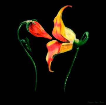 Floyd_Flowers