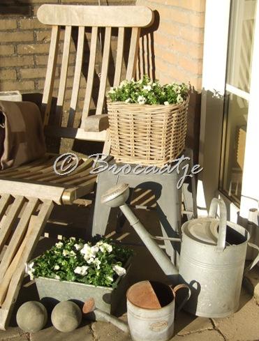 tuin maart 2010 003