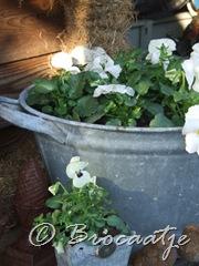tuin maart 2010 007