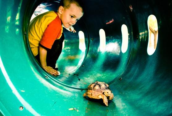 turtleparkweb