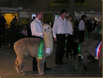 Alpakkautstilling 2010 027
