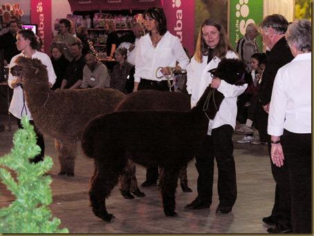 Alpakkautstilling-2010-009a