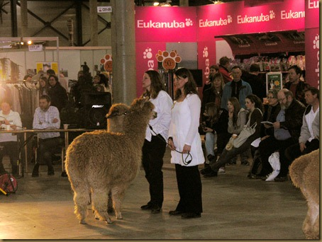 Alpakkautstilling-2010-012a