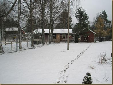 Alpakkajentenes første snø 001