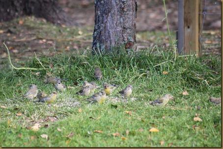 Jentene i hagen, fugl ved materen 065