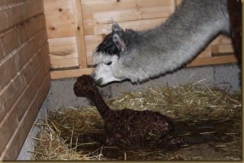 Viella checks her newborn just minutes after birth