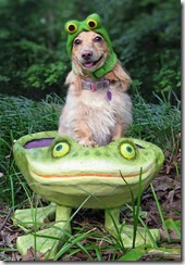 doggy-froggy (Small)