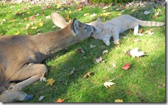 Cat-and-deer (Small)