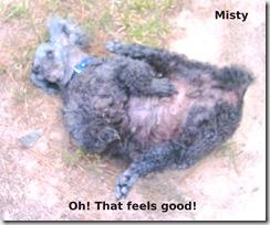 Misty-Ah-Feels-good