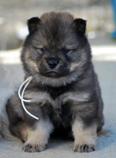 le plus beau chien du monde!!!! 5sema