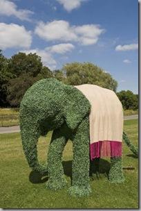 elephantCalvin-Klien
