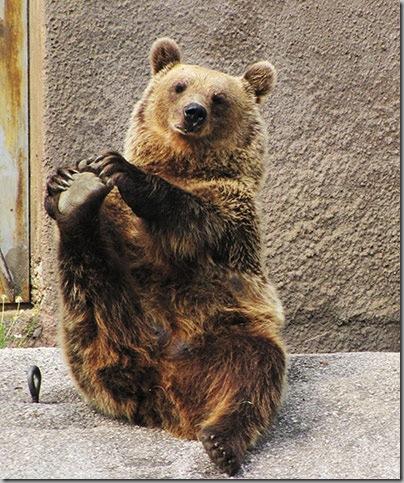 Yoga Bear 1