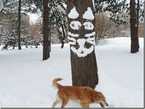 Snowtree-kitty-spots-a-canine-friend-or-foe_-Central-Park_-New-York-City