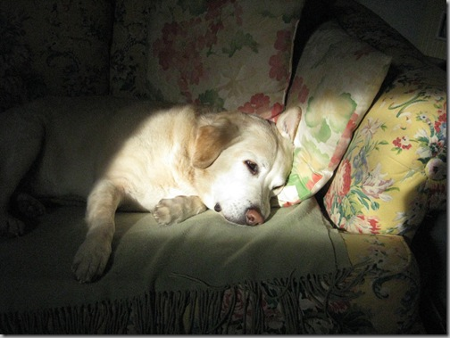 Classic Connor 004