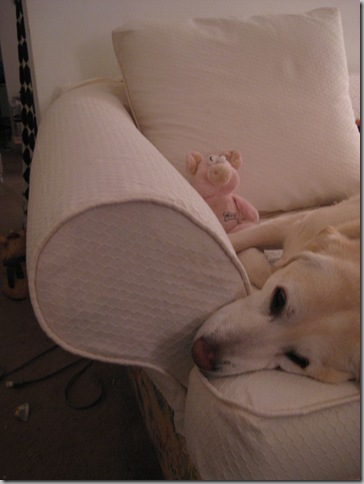 Arny 004