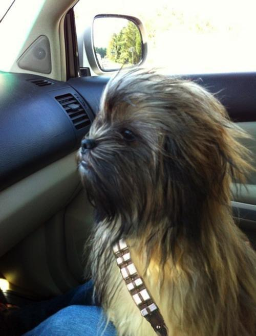 el perro chewbacca