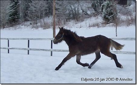 2010-28jan-ridebane_03
